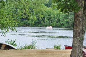 Swan Peddleboat at Witch Meadow Lake Family Campground